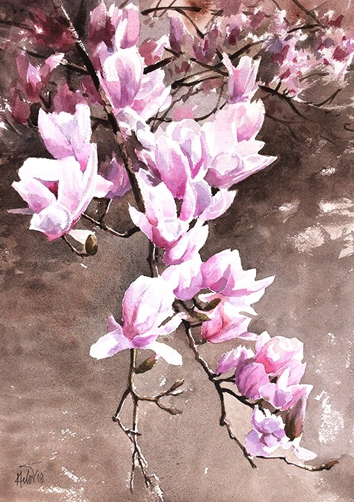 "Magnoliam ,16.5 x11.7"" watercolor on paper"
